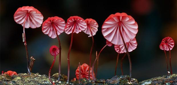La increíble belleza y diversidad de los hongos más raros del mundo, en la fotografía de Steve Axford