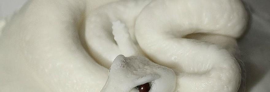Dulces escalofriantes de Christine McConnell