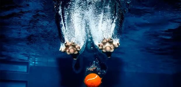 Simpáticos perros bajo el agua en la fotografía de Seth Casteel