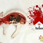 Fumar te hace cómplice de la tortura animal