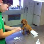 Perros aterrorizados en el veterinario