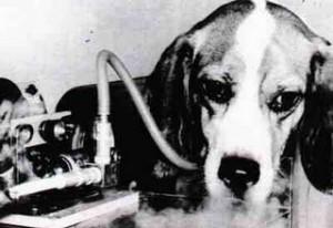 Beagle-Cigarro-300x206