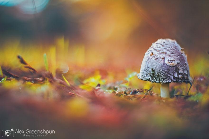 xautumn-photography-alex-greenshpun-10.jpg.pagespeed.ic.F_FbjR6jA7
