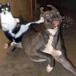 26 razones por las que los gatos son ninjas encubiertos
