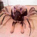 Disfraces de Halloween para tu perro