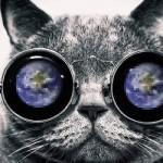 Así ven los gatos el mundo