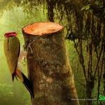 Impactantes imágenes contra la deforestación