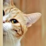 Sabías qué…¿la CURIOSIDAD no mató al gato?